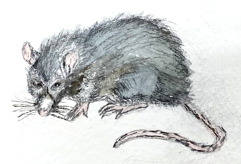 RAT Picture Painted by Jean Gray