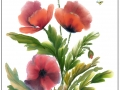 Poppies by Jean Gray